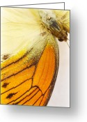 Black Wings Greeting Cards - Orange Yellow Butterfly 6 Greeting Card by Jessica Velasco