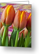 Purples Greeting Cards - Orange Yellow Tulips Greeting Card by Garry Gay
