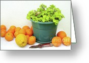 Warm Greeting Cards - Oranges and Vase Greeting Card by Carlos Caetano