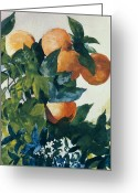 Watercolor On Paper Greeting Cards - Oranges on a Branch Greeting Card by Winslow Homer