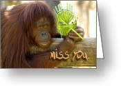 Orangutans Greeting Cards - Orangutan Female Greeting Card by Carolyn Marshall