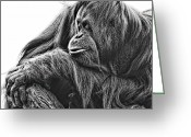 Orangutans Greeting Cards - Orangutan Greeting Card by Lana Trussell
