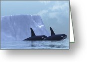 Exploration Digital Art Greeting Cards - Orca Greeting Card by Corey Ford