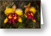 Luscious Greeting Cards - Orchid - Cattleya - Dripping with passion  Greeting Card by Mike Savad