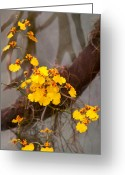 Reds Greeting Cards - Orchid - Golden morning  Greeting Card by Mike Savad