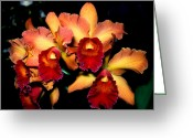 Dendrobium Greeting Cards - Orchid 1 Greeting Card by Terry Elniski