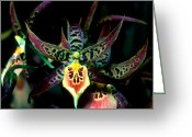 Dendrobium Greeting Cards - Orchid 3 Greeting Card by Terry Elniski