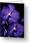 Dendrobium Greeting Cards - Orchid 5 Greeting Card by Terry Elniski