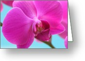 Tropical Photographs Greeting Cards - Orchid at the Ocean Closeup Greeting Card by Michi Sherwood