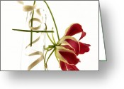 Red Orchid Blooms Greeting Cards - Orchid Greeting Card by Bernard Jaubert