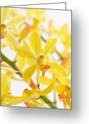 Merchandise Photo Greeting Cards - Orchid Bunch Greeting Card by Atiketta Sangasaeng