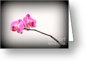 Plant Nursery Greeting Cards - Orchid Greeting Card by Catherine Lau
