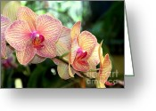 Tropical Photographs Photo Greeting Cards - Orchid Delight Greeting Card by Karen Wiles