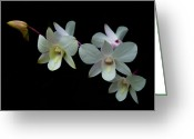Princess Grace Greeting Cards - Orchid Dendrobium Memoria Princess Diana Greeting Card by Dawn  Black