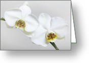 Floral Pyrography Greeting Cards - Orchid Greeting Card by Falko Follert