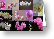 White Orchids Greeting Cards - Orchid Fine Art Flower Photography Greeting Card by Juergen Roth