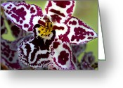 Orchids Greeting Cards - Orchid Flower Greeting Card by C Ribet