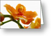 White Orchids Greeting Cards - Orchid Greeting Card by Juergen Roth