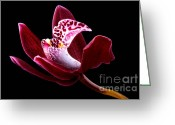 Beauty Mark Greeting Cards - Orchid Greeting Card by Mark Johnson
