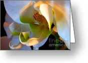 Contemporary Photography Greeting Cards - Orchid Mask No. 2 Greeting Card by Louie Rochon