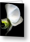 Tamara Stoneburner Greeting Cards - Orchid Nun Greeting Card by Tamara Stoneburner