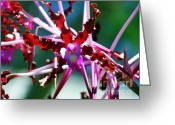 Orchids Photo Greeting Cards - Orchid Spider Greeting Card by Karen Wiles