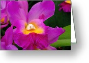 Orchids Greeting Cards - Orchid Variations 1 Greeting Card by Rona Black
