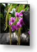Fine Home Art And Theater Greeting Cards - Orchidaceous Greeting Card by Don  Wright