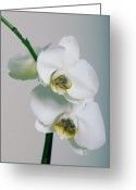 Macro Pyrography Greeting Cards - Orchidee Greeting Card by Falko Follert