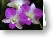 Dendrobium Greeting Cards - Orchids - Best Friends Greeting Card by Kerri Ligatich