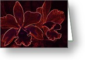 Reds Greeting Cards - Orchids - For Pele Greeting Card by Kerri Ligatich