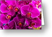 Ocularperceptions Greeting Cards - Orchids A Plenty Greeting Card by Christopher Holmes