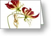 Red Orchid Blooms Greeting Cards - Orchids Greeting Card by Bernard Jaubert
