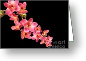 Red Orchid Blooms Greeting Cards - Orchids Greeting Card by Cheryl Young