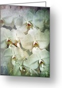 White Orchids Greeting Cards - Orchids Greeting Card by Eena Bo