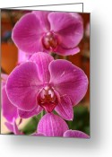 Purples Digital Art Greeting Cards - Orchids in Bloom Greeting Card by Alexander Mendoza
