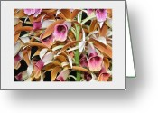 Most Greeting Cards - Orchids in Bloom Greeting Card by Mindy Newman