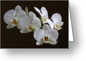 White Orchids Greeting Cards - Orchids Greeting Card by Juergen Roth