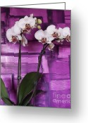 Digitalized Digital Art Greeting Cards - Orchids On Magenta Greeting Card by Marsha Heiken