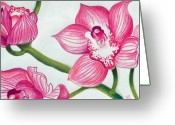 Pink Flower Branch Drawings Greeting Cards - Orchids Greeting Card by Ramneek Narang