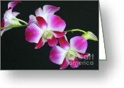 Delicate Bloom Greeting Cards - Orchids Greeting Card by Sabrina L Ryan