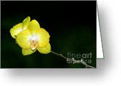 Flowers Miami Greeting Cards - Orchids to the Left Greeting Card by Sabrina L Ryan