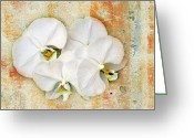 White Orchids Greeting Cards - Orchids Upon The Rough Greeting Card by Andee Photography