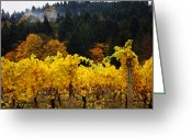 Kansas City Greeting Cards - Oregon Autumn Vineyards Greeting Card by Glenna McRae