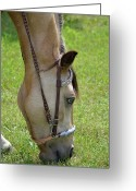 Gaited  Horse Greeting Cards - Oreo Greeting Card by Todd Greening