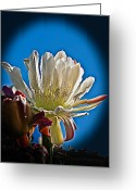 Bloomer Greeting Cards - Organ Pipe Greeting Card by Robert Bales