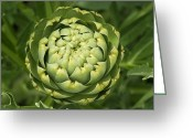 Green Artichoke Greeting Cards - Organic Artichoke Flower Greeting Card by Pete Starman