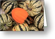 Long Island Greeting Cards - Organic Pumpkins Greeting Card by Wendy Connett