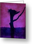 Layered Textures Greeting Cards - Osprey Nest Silhouette - Manasquan Reservoir Greeting Card by Angie McKenzie