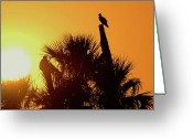 Cabbage Palm Trees Greeting Cards - Osprey Sunset Greeting Card by Don Youngclaus